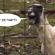 GOATSHINE (Collective Soul ft. The Screaming Goats) - Throwback Thursday!