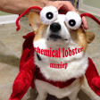 Chemical Lobster